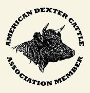 This is the official website of the American Dexter Cattle Association. Types Of Cows, Dexter Cattle, Miniature Cattle, Mini Cows, Longhorn Cow, Holstein Cows, Small Farm, Livestock, Dexter