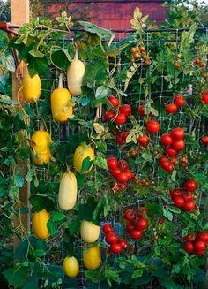 jardim vertical com cano pvc passo a passo - Pesquisa Google