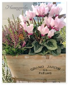 Autumn container Cyclamen Calluna Pernettya t Container Plants, Container Gardening, Fall Window Boxes, Garden Features, Flower Planters, Autumn Garden, Fall Harvest, Green Flowers, Flower Decorations