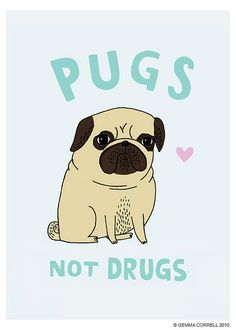 """not drugs Radziwon - makes me think of Lucy! the lovely lady would say """"num nums not drugs"""" - doesn't rhyme, but I don't think she would care ;o)Pug (disambiguation) The pug is a breed of dog. Pug or Pugs may also refer to: Cute Baby Animals, Funny Animals, Drug Cards, Josie Loves, Pugs And Kisses, Pug Art, Cute Pugs, Funny Pugs, Pug Love"""