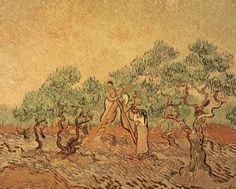 The Olive Grove, 1889 Giclee Print Poster by Vincent Van Gogh Online On Sale at Wall Art Store – Posters-Print.com