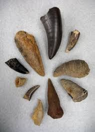 Image result for fossilized bone identification