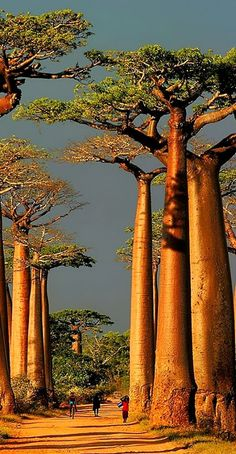 Amazing and beautiful trees. Our planet is truly amazing.