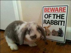 Beware of the rabbit