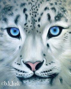Signed Print White Leopard Behind Blue Eyes Snow Big Cat Kitty Animal Jungle Art #Realism