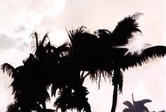Jay Bower - It's a bird it's a palm, Acrylic on canvas, Jay, Bird, Canvas, Collection, Tela, Birds, Canvases