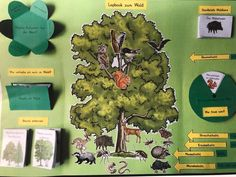 """Explore the Forest Elementary class Week 3  As a repetition in week 3, the pupils have created a forest lapbook. With this form of presentation, the children can work on, consolidate and creatively implement lesson topics.  The theme of week 3 is """"the forest and its inhabitants"""".We differentiate between coniferous and deciduous trees, from the root layer to the tree layer, the pupils learn about the benefits of the forest.The Primary School Teacher, Primary Education, Teaching Kids, Kids Learning, Lap Book Templates, Little Pigs, Science For Kids, Science Projects, Life Skills"""