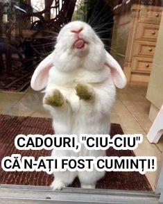 Animals And Pets, Humor, Mai, Memes, Funny, Pets, Humour, Moon Moon, Animal Jokes