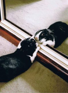 I get so tired admiring myself in the mirror, sometimes I have to rest.