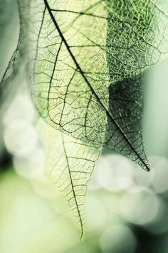 Pristine green leaf texture