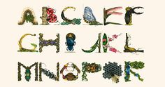 http://www.boredpanda.com/insect-alphabet-by-paula-duta/