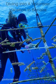 A diver cleans the coral trees in Bonaire's underwater nursery. Find out how you can become a certified coral restoration diver at goinformed.net