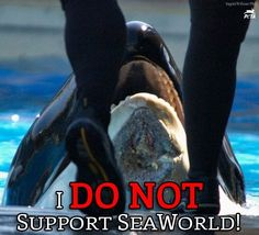 Close SeaWorld!! the poor whales etc...r stuffed in small tanks with the lights off.