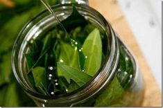 Bay essential oil is extracted from steam distillation of bay leaf. Bay essential oil odor is sweet, spicy and flowery. Bay Leaf Benefits, Oil Benefits, Health Benefits, Herbal Medicine, Natural Medicine, Herbal Remedies, Natural Remedies, Infused Oils, Natural Health