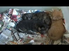 Whats in the Box ? yes you guess box full of kittens - YouTube