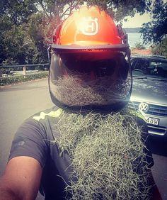 Old mans beard  #spanishmoss #airplant #bromeliad #beard #beards #plant #garden #gardener #instagram #humpday #potd #picoftheday #tbt #lovemyjob #love #happy #husqvarnafan #footprintgardens #husqvarna #readywhenyouare #landscaper #landscapedesign #instagood #lawncare #helmet #safety #arborist