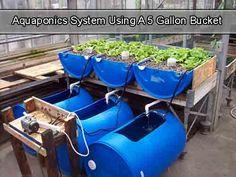 Aquaponics System Using A 5 Gallon Bucket - LivingGreenAndFrugally.com