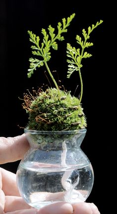 Air Plants, Garden Plants, Indoor Plants, House Plants, Terrarium Plants, Succulent Terrarium, Bottle Garden, Water Garden, Plant Art
