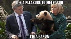 Panda!!