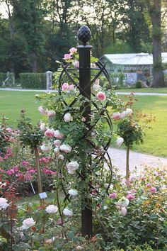 (1/4) Eden ist ein altes Wort für Paradies. Ein Hauch davon übermittelt die bezaubernde 'Eden Rose' (oder auch 'Pierre de Ronsard' genannt) von Meilland (1985).  Im Foto: 'Eden Rose 85' (links) wird um die Rosensäule Charleston von Classic Garden Elements angebunden.