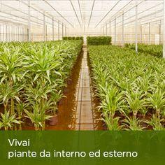 Presidiamo tutti i settori principali del florovivaismo: vivai con piante da interno ed esterno.