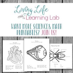 Get to know the different life stages of ants with these cute ant life cycle worksheets. How many parts of an ant can you find? Montessori Education, Son Love, Nature Study, Science Activities, Life Cycles, Early Learning, Human Body, Hawthorne Yellow, Worksheets