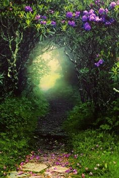 A pretty garden tunnel ~grands would love this secret place <3