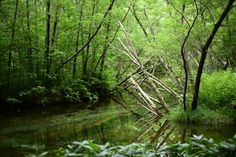 北アルプスの谷間、清流・梓川上流に鮮やかな高原林が広がる上高地。梓川に沿って、なだらかで歩きやすいウォーキングコースが整備されていてます。歩み進める度に変化する上高地の表情を楽しんで。