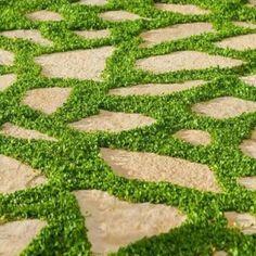 Le Dichondra rampant (Dichondra repens) est une plante vivace rampante utilisée comme couvre-sol et alternative aux gazons classiques. Il bénéficie d'une très bonne résistance à la chaleur, à l'ombre, ainsi qu'aux embruns. C'est la plante idéale pour constituer un beau gazon en bords de mer et dans le Sud de la France.