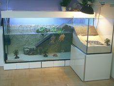 Как обустроить акватеррариум для водных черепах - Черепахи.