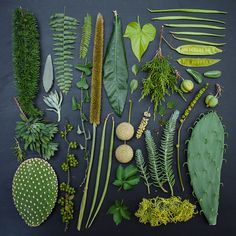 "Emily Bliocoe's ""The Garden Collection"" - plants in her garden categorised according to colour."