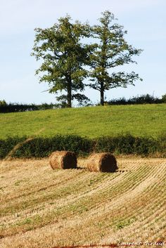 bales Country Farm, Country Life, Country Girls, Country Living, Country Bumpkin, Champs, Hay Day, Summer Songs, Hay Bales