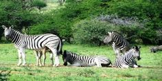 Joburg day-trip ideas make for interesting combinations - South African Tourism Update Local Tour, Game Reserve, Day Trip, Safari, Places To Go, Tourism, African, Park, Animals