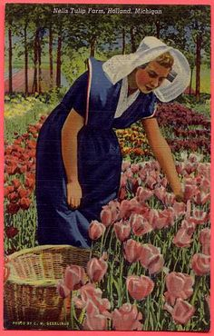 HOLLAND, MICHIGAN, NELIS TULIP FARM, LINEN — Ancient Tony Vintage PostCards