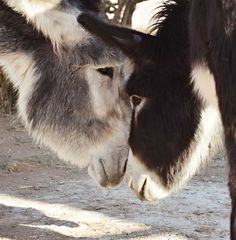 """""""Alan: You don't scare me, you know.""""      Courtesy: Linda Carson, 7 Miles South of Nowhere, New Mexico (USA)."""