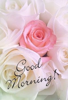 Good Morning Picture, Morning Pictures, Good Morning Images, G Morning, Good Morning Wishes, Good Day Quotes, Good Morning Quotes, Vacaciones Gif, Greetings For The Day