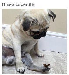 Resultado de imagem para dog meme
