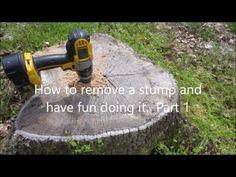 how to mix epsom salt to kill stumps g rten. Black Bedroom Furniture Sets. Home Design Ideas
