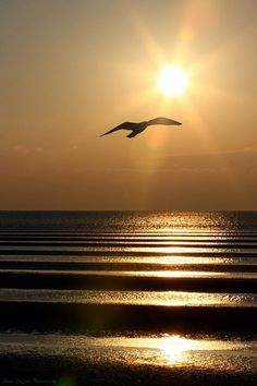 Beautiful sunrise over the ocean with a silhouetted sea gull. Beautiful World, Beautiful Places, Beautiful Pictures, Beautiful Sunrise, Belleza Natural, Ciel, Belle Photo, Cool Photos, Scenery