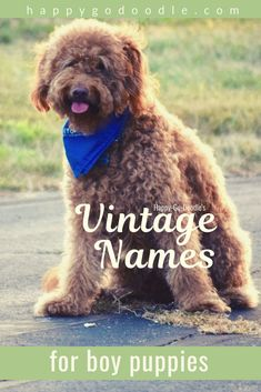 dog names Looking for a dog name for your boy puppy Whether youre looking for classic names, retro names, or old-timey grandpa names, old-fashioned names, they are all new again. Check out this list of 101 vintage names for your dog. Boy Dog Names Unique, Small Dog Names, Dog Names Male, Pet Names, Popular Boy Dog Names, Best Dog Names Boys, Different Dog Names, Top Dog Names, Hunting Dog Names