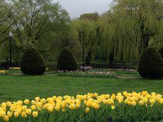 The Boston Common, the ultimate dreamy garden.