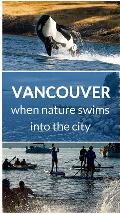 """Vancouver - when nature swims into the city."" by Johanna Read. Orca photograph by Shawn McCready, https://www.flickr.com/photos/shawnmccready/"