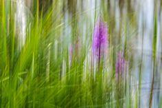 gräser in bewegung (by foto-fuks)