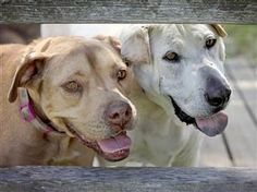 'No dog should die alone': Photographer promotes senior pet adoption - TODAY.com