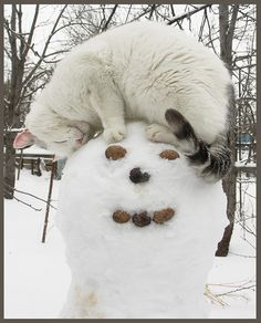 This is like the 4th pin I have found with cats and snowmen?? Obsession perhaps??...lol