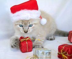 Editorial:  Boas Festas!  Dezembro chegou,e com ele vieram as comemorações, as datas especiais. Férias para alguns, Natal, Ano Novo, muitas...