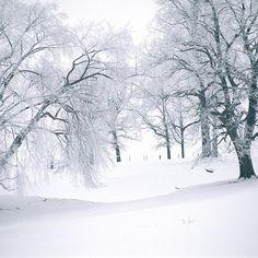 A hauntingly beautiful winter scene near Long Prairie, MN. #winter #snow #nofilter #OnlyinMN