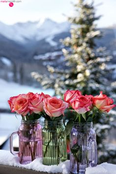 Roses in snowy Telluride, CO | MarlaMeridith.com ( @marlameridith )