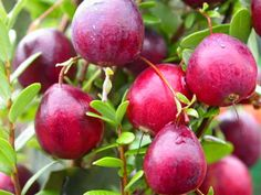 Simple Ways to Stay Healthy: Cranberries