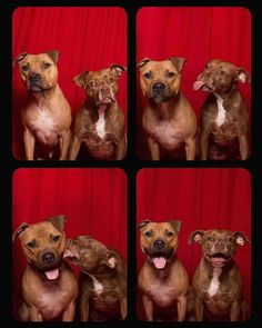 12 Pictures of Dogs in Photo Booths That Are Just Too Cute to Handle